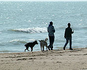 dog-beach-238dis