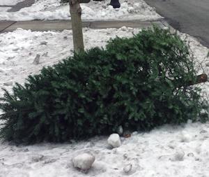 TreePickup_webhomepage