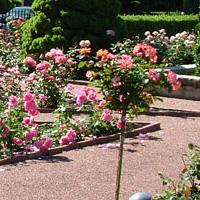 Merrick Garden