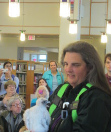 falcon banding at Evanston Public Library