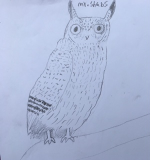 owl pic